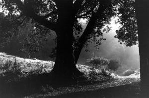 treephotobythomasmerton